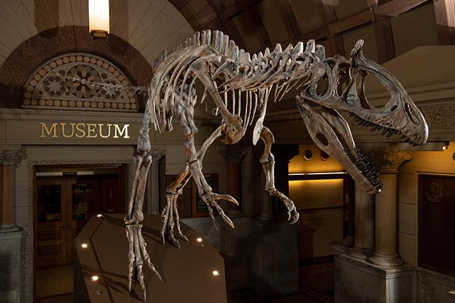 Cryolophosaurus ellioti, Orton Geological Museum
