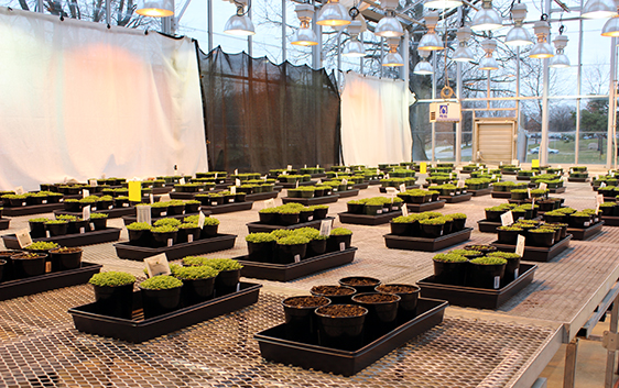 One of the greenhouses managed by Ohio State's Arabidopsis Biological Resource Center