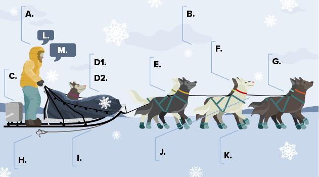 Illustration of a dog sled