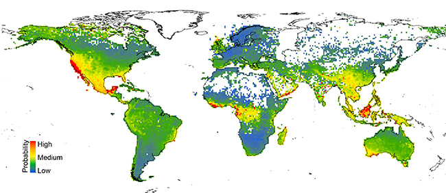 This map shows the predicted levels of risk to more than 150,000 species of plants located worldwide, with warmer colors denoting areas with larger numbers of potentially at-risk species. Image courtesy Anahí Espíndola and Tara Pelletier.