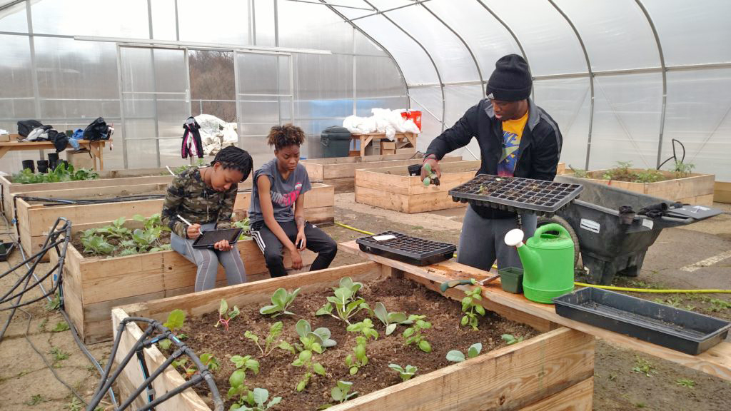 Students gardening in microfarm