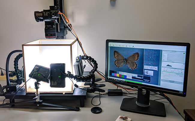 A butterfly specimen ready to be imaged at the Museum of Biological Diversity.