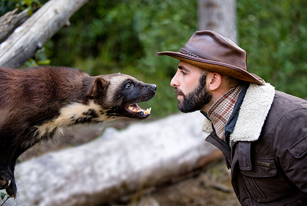 Coyote Peterson faces off against a wolverine