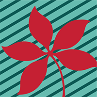 Red buckeye leaf on teal background