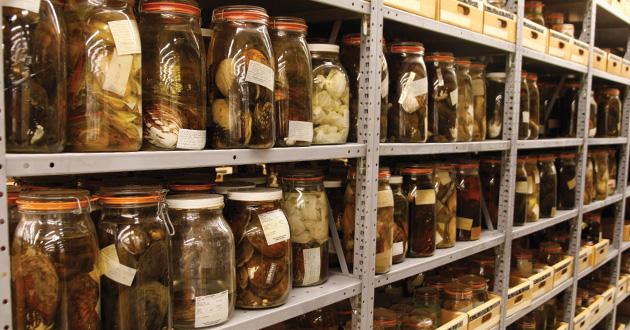 Preserved specimens in storage jars.