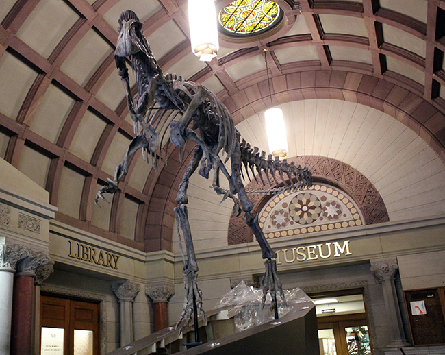 For more than 120 years, the Orton Geological Museum has played an important role in teaching, outreach and research, and the addition of the Cryolophosaurus in the building's lobby is furthering the university's land grant mission.