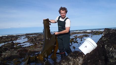 Pau Larson with bull kelp