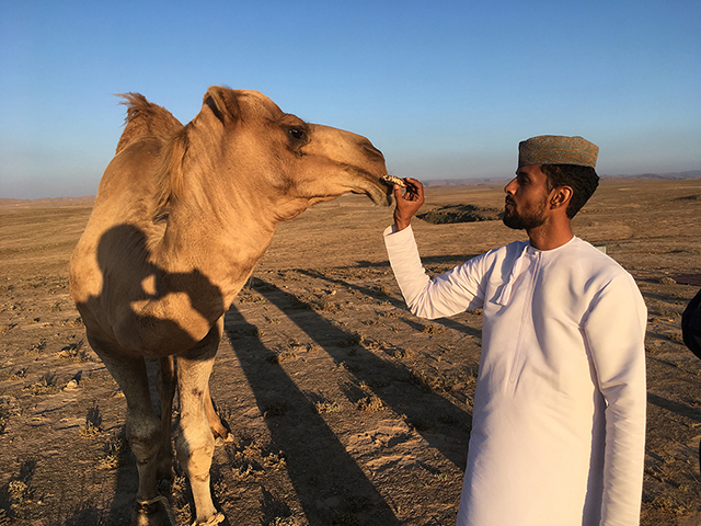 Camel Culture by Mark Moritz