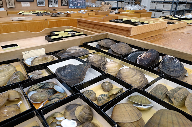 Mollusks at Ohio State's Museum of Biological Diversity