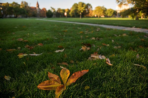 Autumn on the Oval.