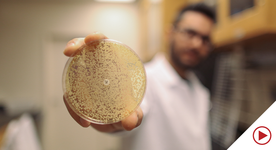Student in a lab holding up a petri dish
