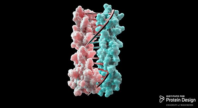 Image courtesy University of Washington Institute for Protein Design