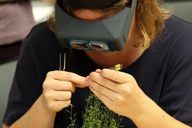 ABRC staff learns hands-on techniques for plant research as part of internal training.