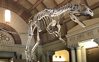 A cast of the Cryolophosaurus ellioti skeleton was installed at Orton Hall on Sept. 18, 2018.