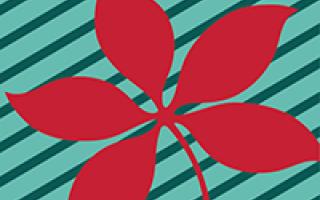 Red buckeye leaf on teal background