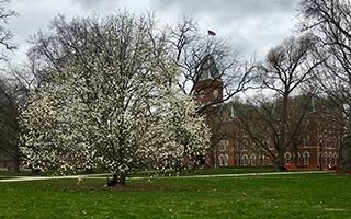 University Hall spring