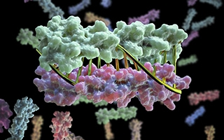 Image credit: University of Washington Institute for Protein Design
