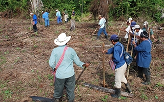 Maya farmers practicing swidden agriculture