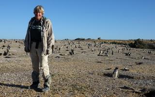 Dee Boersma, image courtesy Center for Ecosystem Sentinels
