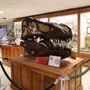 Orton Museum back display