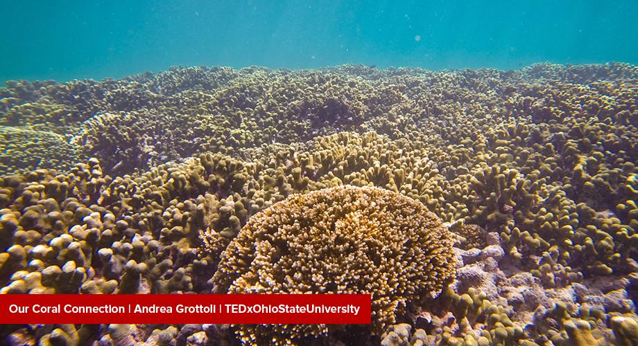 Grotolli at TEDXOhioStateUniversity