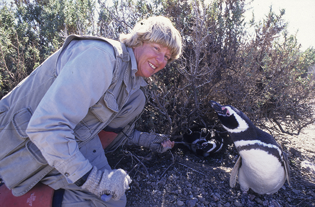 Dee Boersma, image courtesy Center for Ecosystem Sentinels